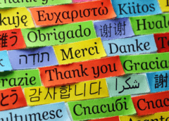 Why Professional Translation Services Are Important For an Organization